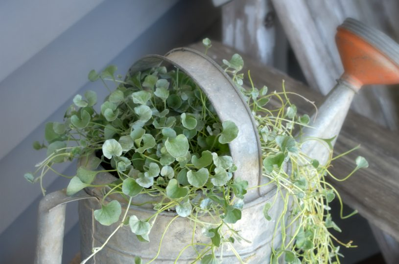 vintage-watering-can