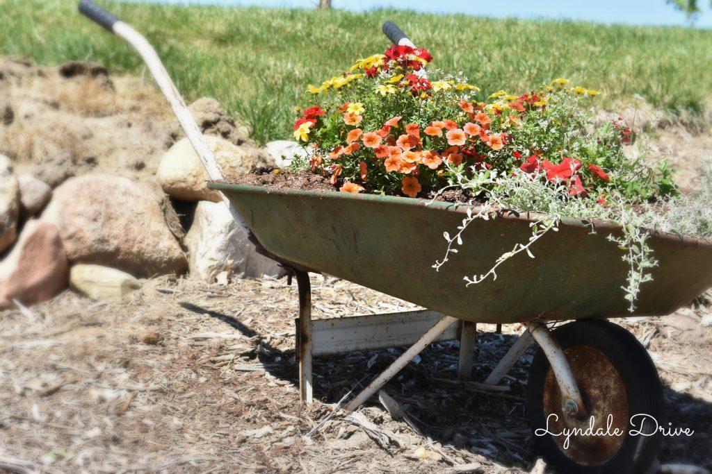 wheel-borrow-full-of-flowers